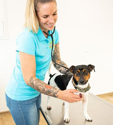 Untersuchung am Hund in der Tierarztpraxis Dr. Thormann in Bönen